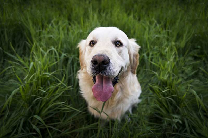 Dogs Can Get Lyme Disease