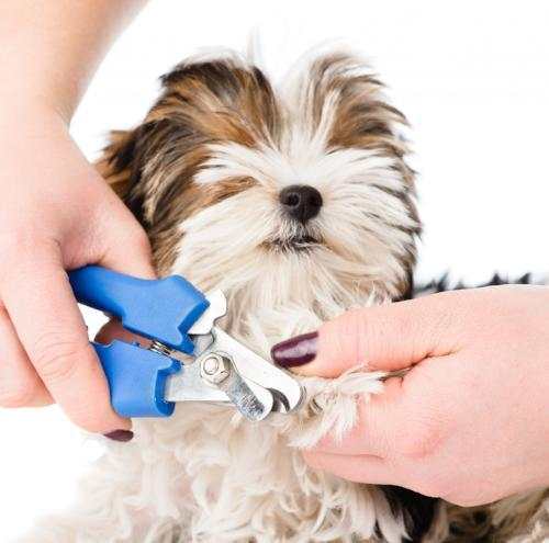 How To Clip Your Pets' Nails Painlessly