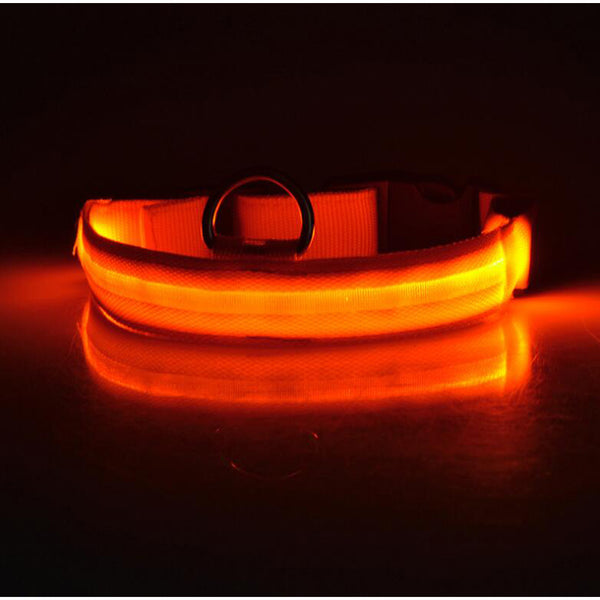 Safety <br>LED Collar