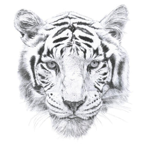 Tiger | Wall Sticker