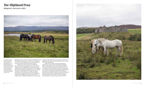 Equine Journeys profile of The Highland Pony