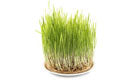 3-ormus-supergreens-oat-grass.jpg