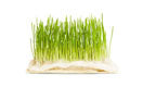 4-ormus-supergreens-wheat-grass.jpg