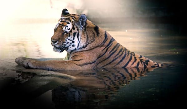 does the tiger live in life of pi