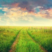 field_flowers_clouds_colors_summer_track_pic