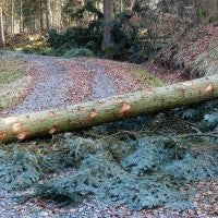 forest_trees_road_block_fallen_pic