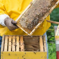 honeycomb_beeswax_bees_wax_honey_beekeeper_pic