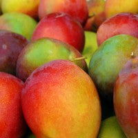 mango_great_source_nutrients_image