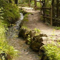 path_trail_stream_hike_nature_green_pic
