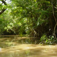 trees_in_amazon_brazil_to_count_them_all_image