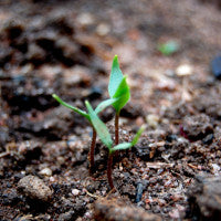 create_the_perfect_soil_for_your_vegan_garden_pic