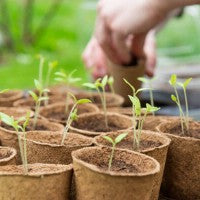 seedlings_garden_grow_plants_spring_outdoors_healthy_sunshine_fun_pic
