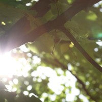 sunlight_tree_air_oxygen_shine_branches_pic