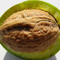 walnut_tree_nut_healthy_fats_pic