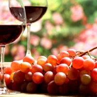 wine_grapes_red_vineyard_organic_pesticides_pic