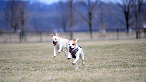 the best dog parks in colorado