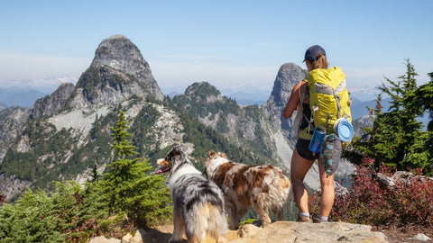3 things to do while hiking with your dogs in colorado