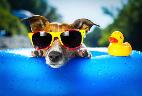 Protect your dog from the summer heat
