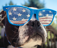 HELP YOUR DOGS AVOID STRESS FROM FIREWORKS THIS 4TH OF JULY