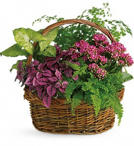 Green thumb indoor plant garden basket