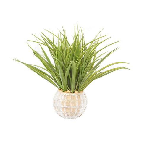 "Set of 2 Plastic grass in glass vases 12x12x13""H"