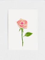 "Blush Rose #1 Original Watercolour Painting - 11"" x15"""