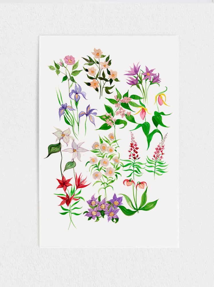 Canadian Provincial Flowers Print