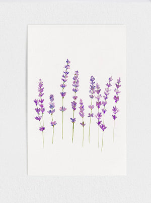 Load image into Gallery viewer, Wild Lavender Print