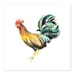 Rooster Limited Edition