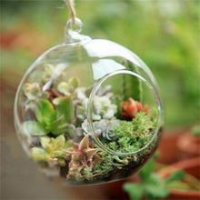 Terrarium Ball Shape Clear Hanging Glass Vase