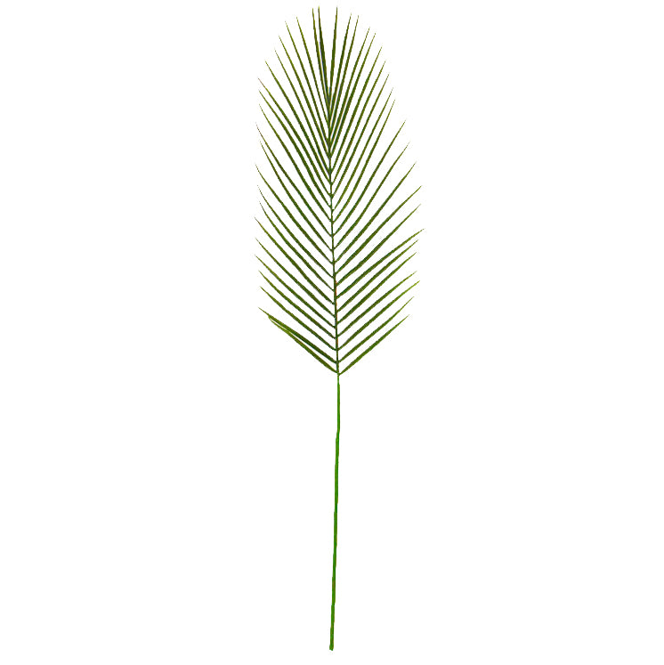 Cycad Leaf Straight
