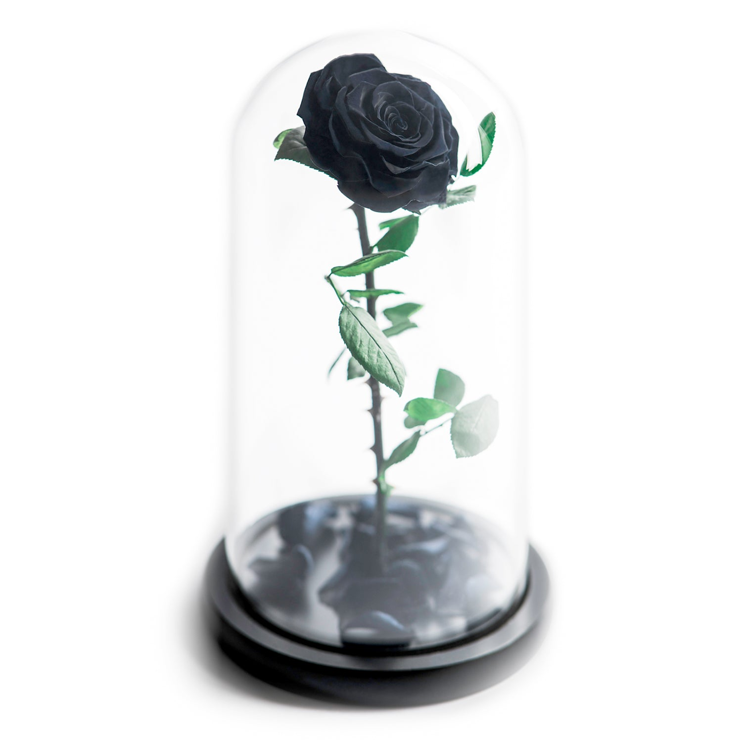 The Beauty and the Beast contains one black eternity rose, picked at the point of perfection and preserved to last at least one year. Rose in glass dome