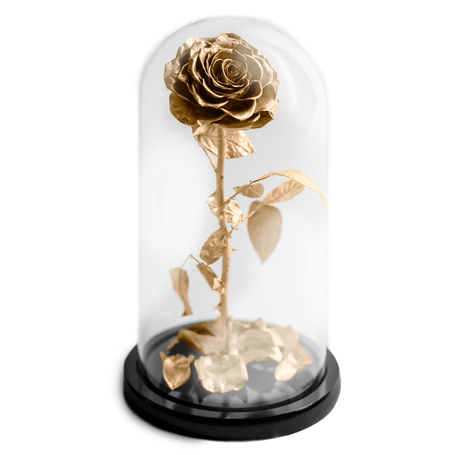 The Beauty and the Beast contains one gold eternity rose, picked at the point of perfection and preserved to last at least one year. Rose in glass dome