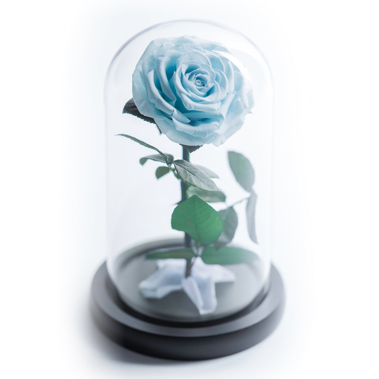The Beauty and the Beast contains one blue color eternity rose, picked at the point of perfection and preserved to last at least one year. Rose in small glass dome