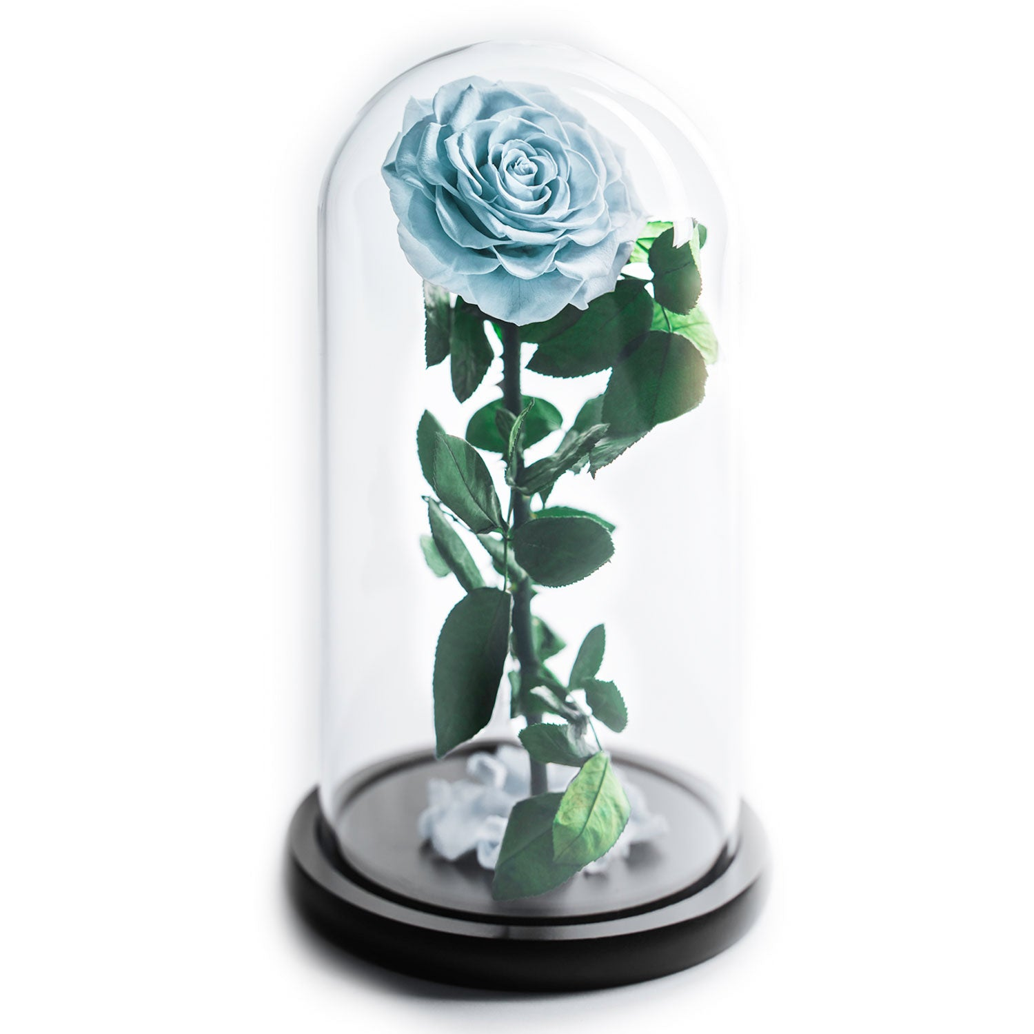 Premium blue rose in glass container - Mon Amour Flowers
