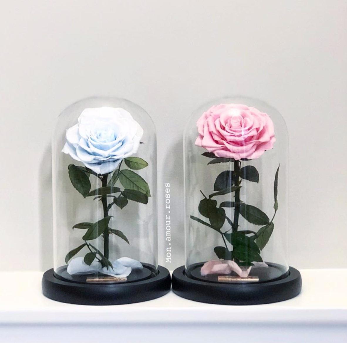 Mini Majestic Rose