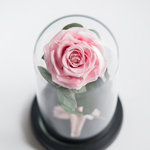 Preserved Rose in glass dome - Mon Amour Flowers