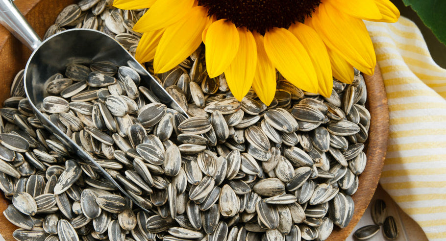 Vegan Omega 3: Everything You Need To Know