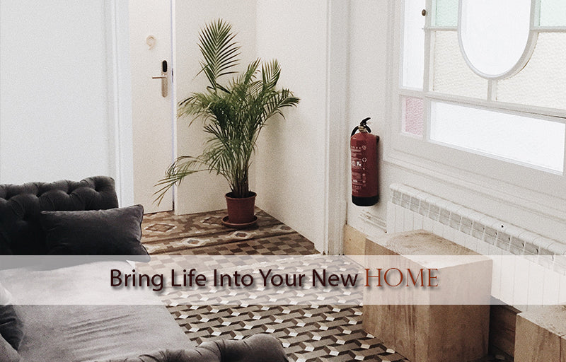 Bringing Life into Your New Home