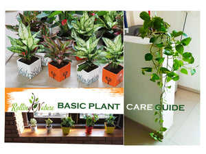 Rolling Nature Plants: Basic Care Guide