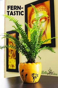 Fern-Tastic: Natural Coolers & Air Purifiers
