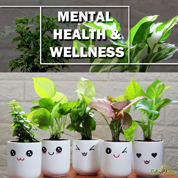 6 Ways How Plants Can Boost Your Mental Health & Wellness