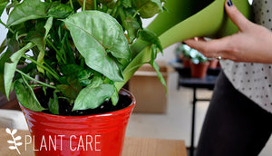 Winter Care Tips for your Plants