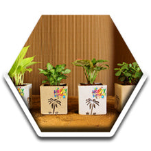 Green Gifting, Wedding Gift, Corporate Gifting, Return Gift, Live Plants, India