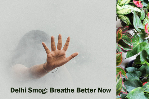 Plants, Indoors, Breathe, Health, Rolling, Nature, Delhi, NCR, Plants, Smog, Diwali, Stubble, Pollution, Indoors, Outdoors, PPM, Airpurifying,