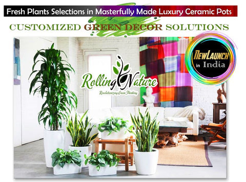 customized green decor, green plants, live, natural, online, Indoor, Outdoor, Planters, Pots
