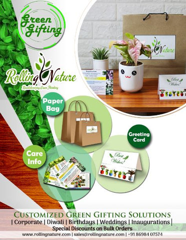 Rolling Nature, Green Gifting, Plants, Indoor , Pots Ceramic, Customization,