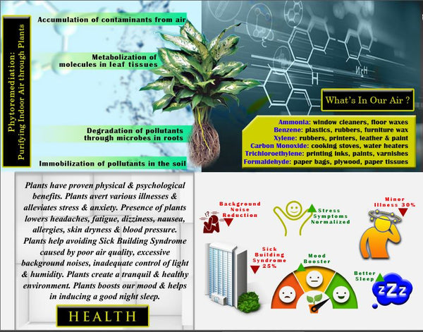 Rolling Nature, NASA, Science, Phytoremediation,  Air, Pollution, Indoors, plants, AQI, Filter, VOC's, Benefits, Rolling, Nature, Health, Fresh, Air, Houseplants,