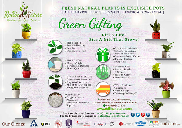 Customized, Green Gifting, Rolling Nature, India, Company