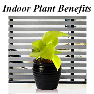 Indoor Plants Benefit